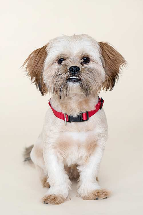 Cute dog photoshoots Northern Ireland