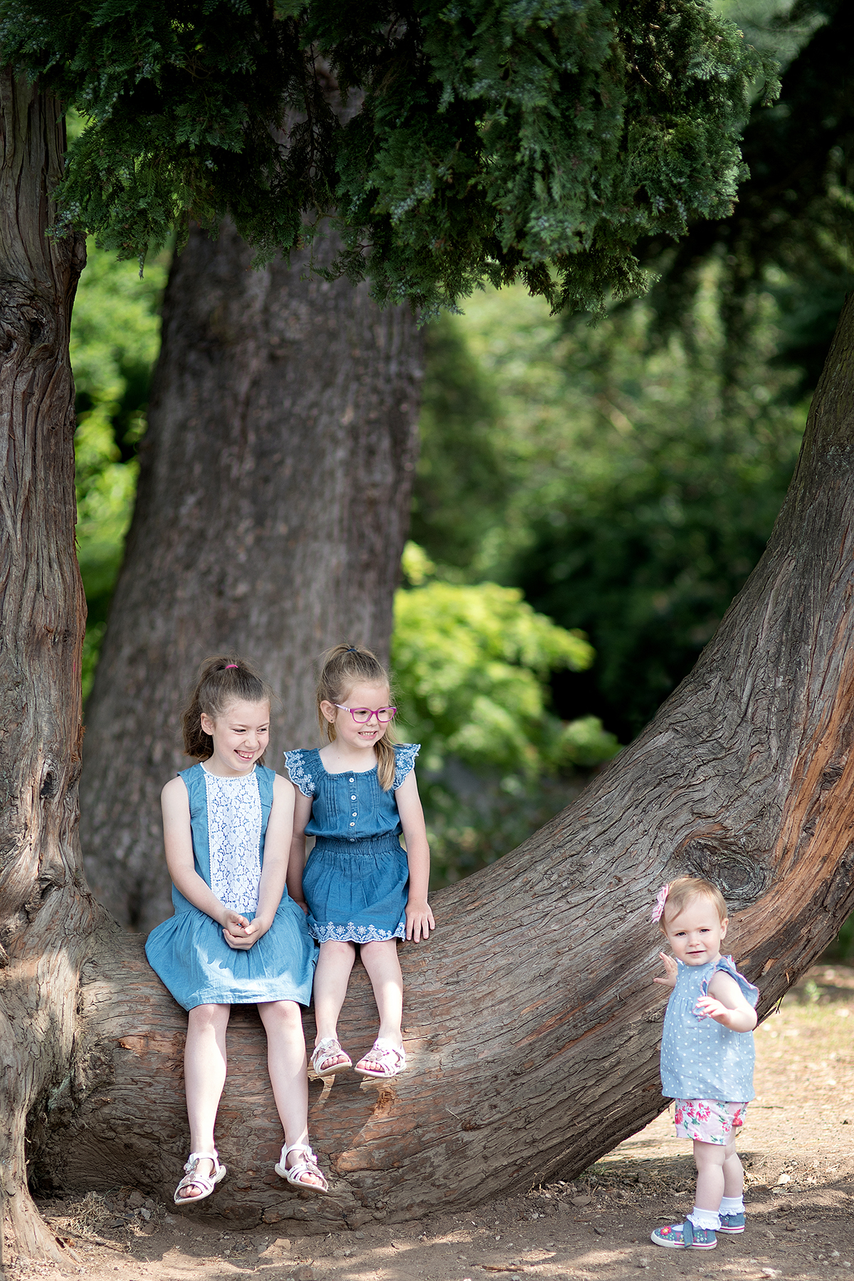 children playing on a tree outside