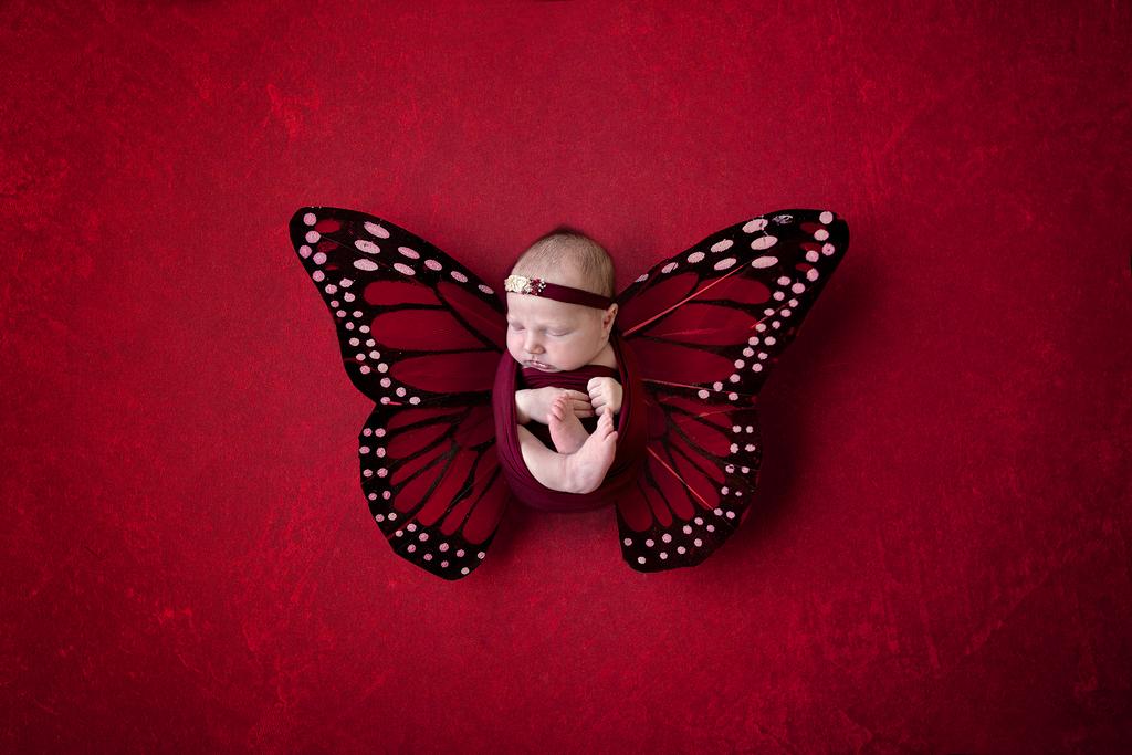 newborn sleeps in butterfly wings in a red setting